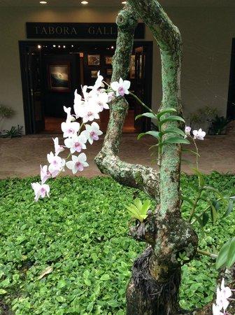 Kaua'i Marriott Resort : Orchid plant in main gardens