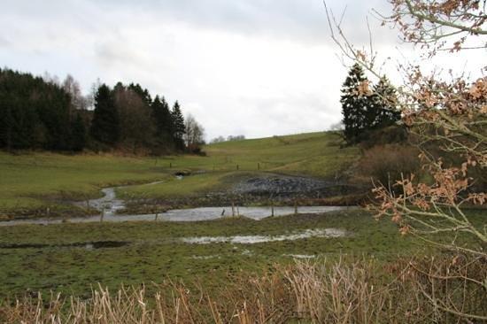 Domaine du Moulin d'Asselborn : nature des environs