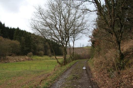 Domaine du Moulin d'Asselborn : chemin de randonnee