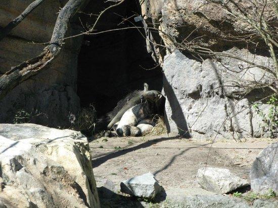 Jacksonville Zoo & Gardens : Baby Anteater
