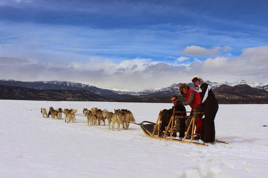 Driving the sleds in tandem - Picture of Pagosa Dogsled Adventures ...