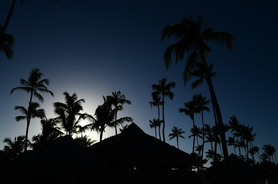 Paradisus Punta Cana : Palmeras en Gaby Beach