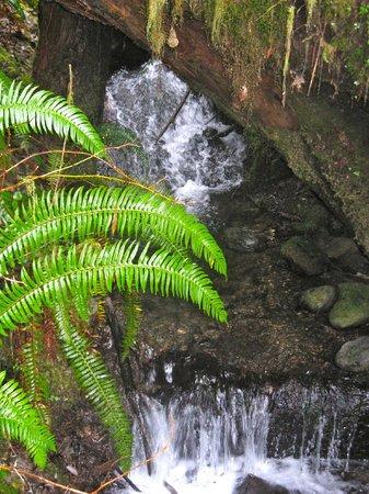 Lake Quinault Lodge: Rainforest trail