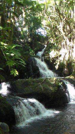 Hawaii Tropical Botanical Garden: Falls at the Gardens