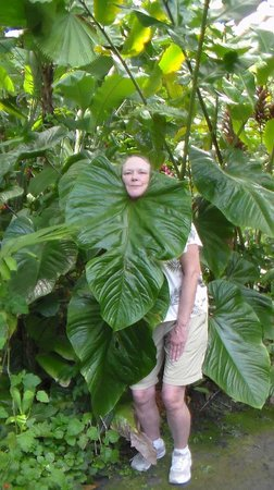 Hawaii Tropical Botanical Garden : Silly Fun at the Gardens