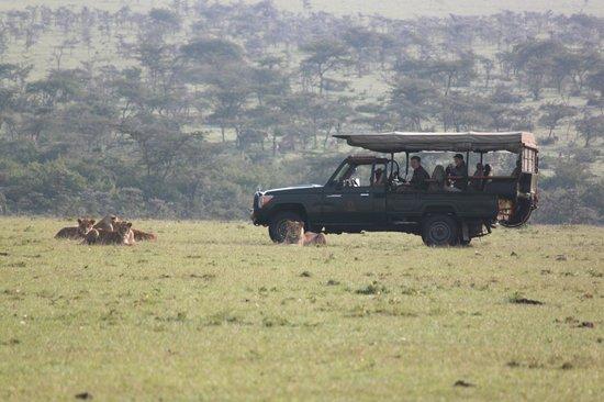 Encounter Mara, Asilia Africa: game drive