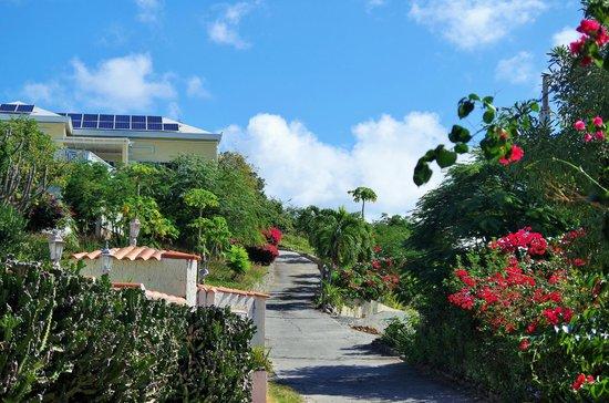 Villa Marbella Suites: Driveway to Villa Marbella