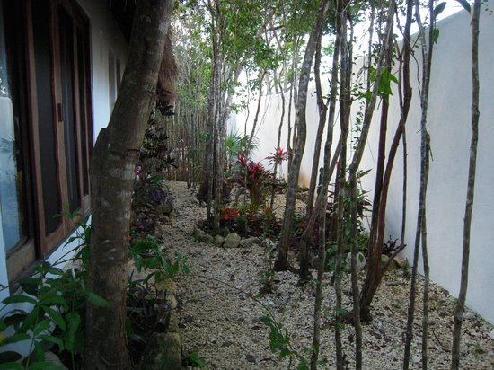 La Onda Encantada : Garden view from bedrooms