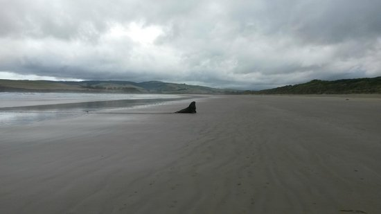 Catlins Newhaven Holiday Park: sea lion on the beach