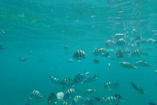 Simba Sea Trips: Phi Phi Sunrise Trip