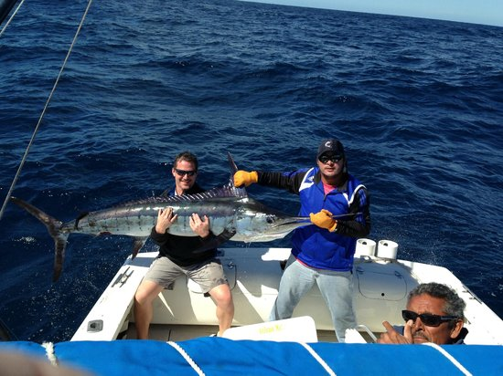 Blue striped marlin picture of pisces sportfishing cabo for Pisces fishing cabo