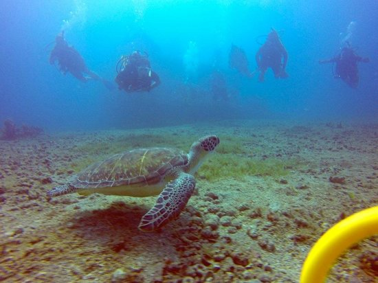 Kenneth's Dive Center: Turtle and divers