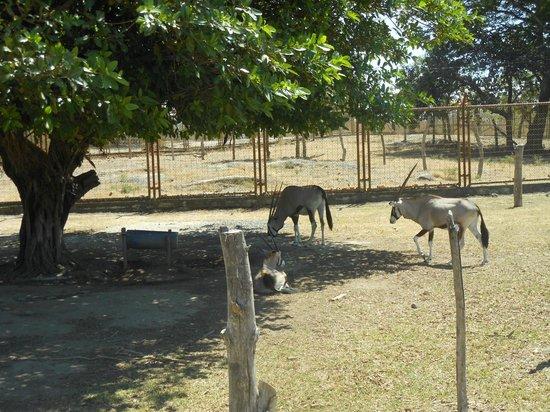 Ponderosa Adventure Park: Legend of the Unicorn...