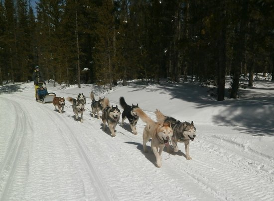 Good Times Adventures : More Happy Dogs!