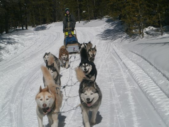 Good Times Adventures : Happy dogs