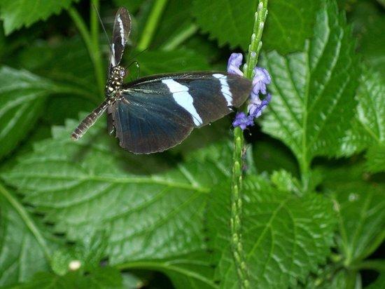 Butterfly House & Aquarium: Caught in flight