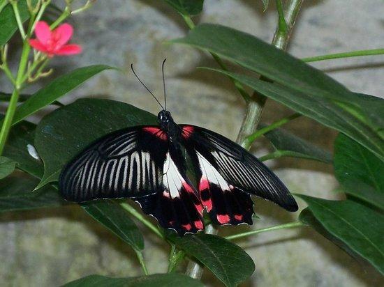 Butterfly House & Aquarium: On a leaf