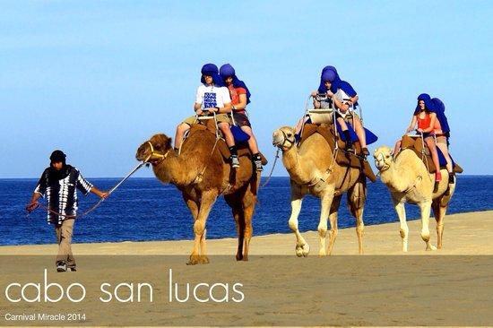 Cabo Adventures : Feb-2014