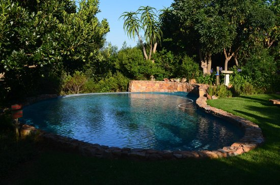 Paradise Cove Guesthouse: Pool