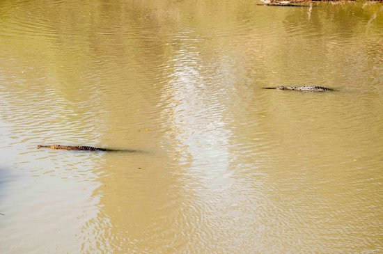 Border Store in Kakadu: crocs at cahill's crossing