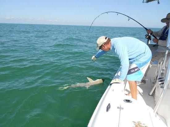 True Island Adventures: Sharks in the Gulf Streem