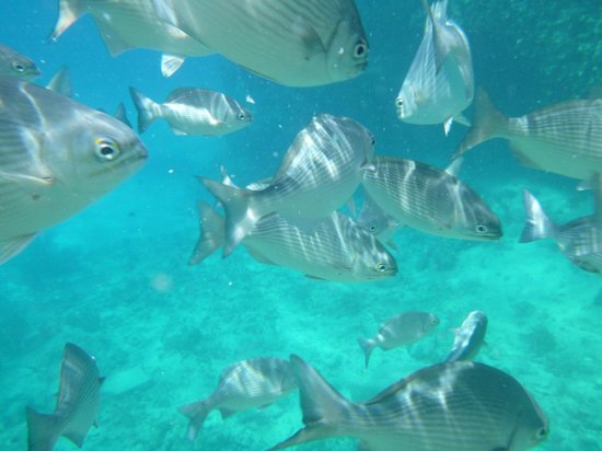 Apartahotel Las Americas : la piscinita es uno de los lugares que pueden visitar en la isla pagando unos pesos