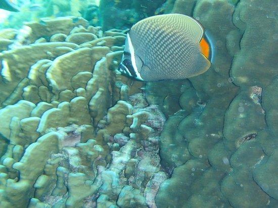Easy Day Thailand: fish !