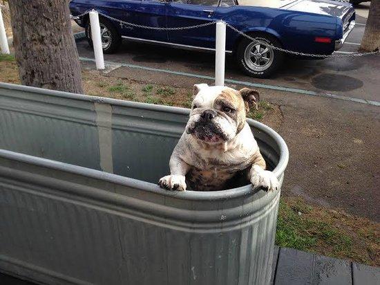 Ocean Villa Inn : Lily in the large dog wash tub