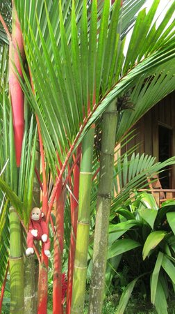Hotel Rancho Cerro Azul: Tranquil setting