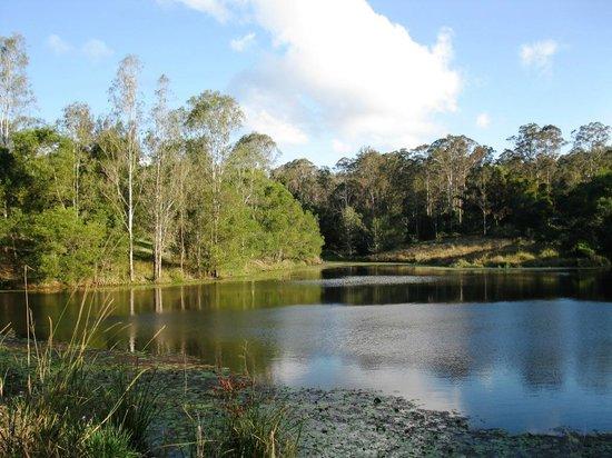 Conondale, Australia: the dam near the Visitor's Camping Area supports an abundance of birdlife