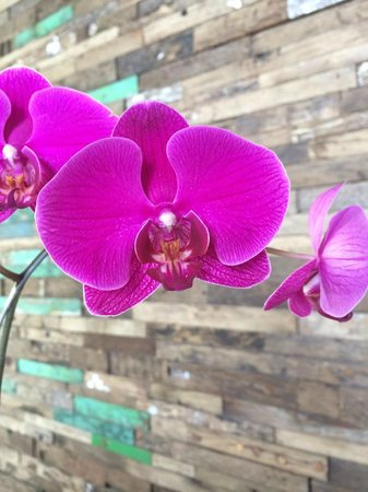 RIMBA Jimbaran BALI by AYANA: Orchids in the Foyer