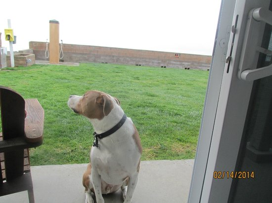 Cayucos Shoreline Inn...on the beach: My boy Tank wanting to go to the beach instead of sitting for a picture!