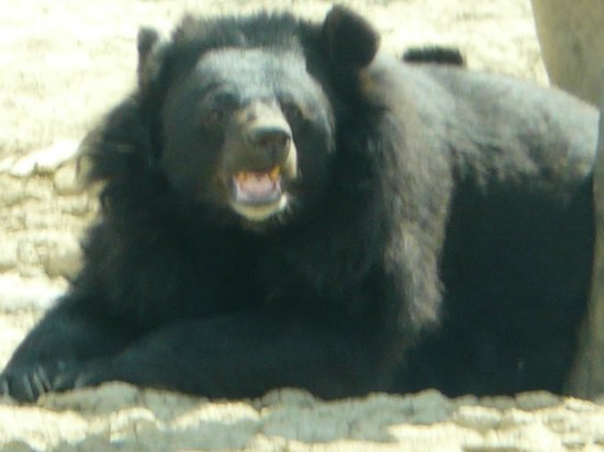 Reserve Africaine de Sigean: ours