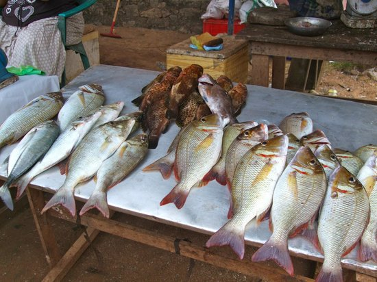 Hotel Goldi Sands: Go and see the local catch.