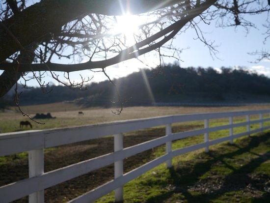 Rancho Bernardo Bed & Breakfast: ranch