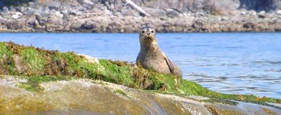 Footprint Nature Explorations: Footprint Wildlife Kayak Tours