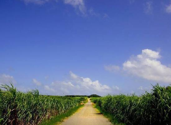 Okinawa Prefecture, Japan: sugarcane
