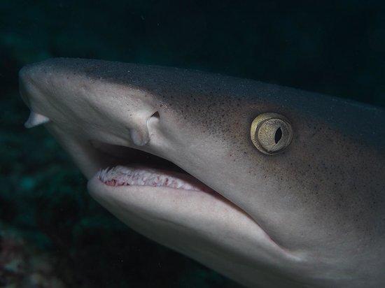 Seaventures Dive Rig : sharks