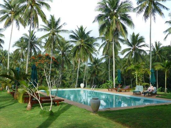 Jims Farm Villas: lovely pool