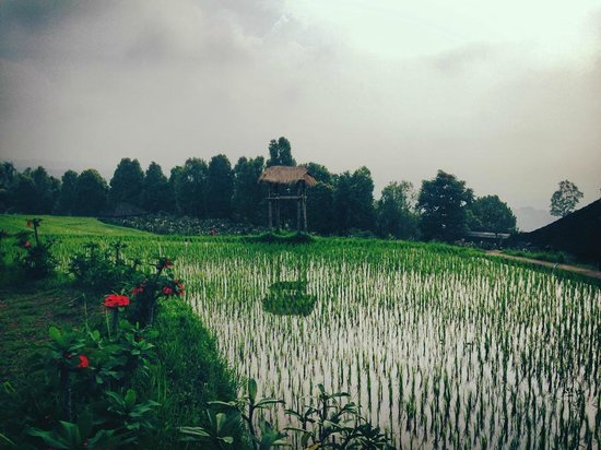 Puri Lumbung Cottages : Just amazing