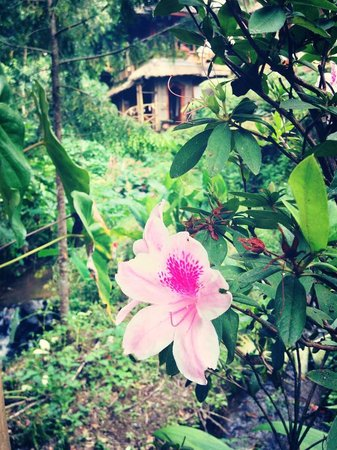 Puri Lumbung Cottages : Flowers were everywhere
