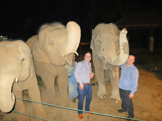 Anantara Golden Triangle Elephant Camp Resort Dining By Design Private Dinner At Baby