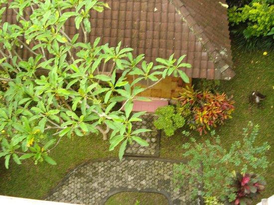 Sayong House : Jardin
