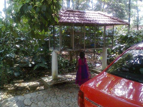 Cool Resort: car parking