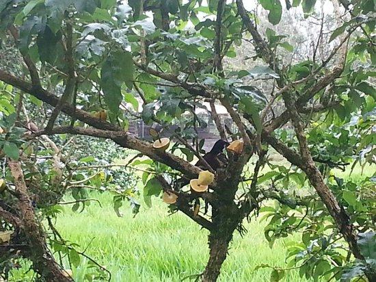 El Novillo del Arenal : Jardin