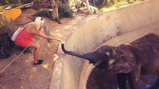 Friguia Park: feeding elephants for about 80p (2 dinars)