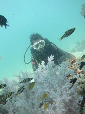 Ocean Pro Divers: diving with OceanPro Divers