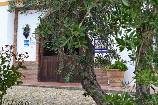 Hotel Caserio de Iznajar: Tras el olivo