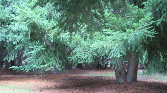 Las Acacias : jardin