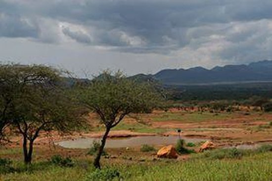 Natural World Kenya Safaris: View from the hotel in Tsavo West (an elephant came up to drink water that night